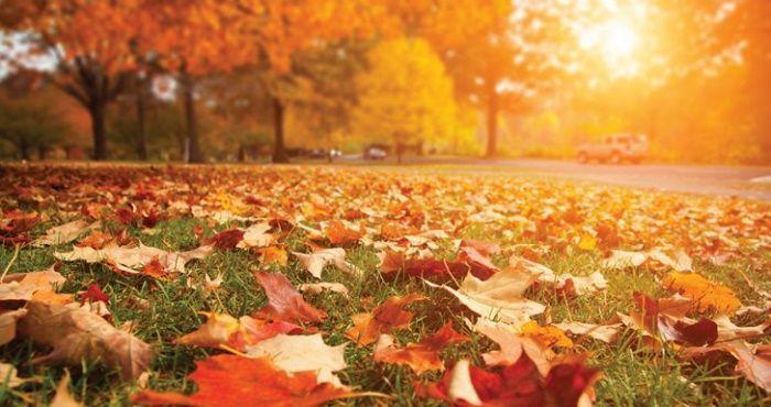 Fotos en otoño mejor hora