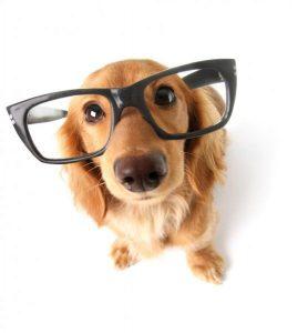 fotos perros barcelona